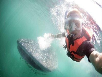 Holbox Whale Shark Tours Snorkel