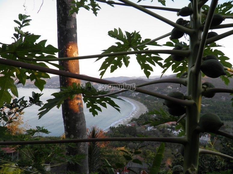 Paseo en jardin botanico