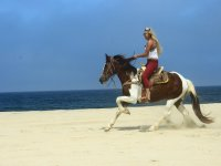 Recorre toda la playa a caballo