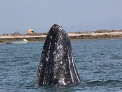 Alternatura X-pediciones Whale Watching
