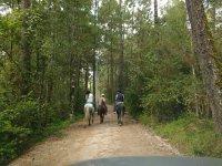 Sumergete en la naturaleza con tu caballo