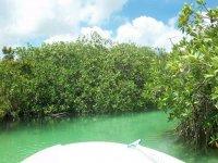 Paseos en los manglares