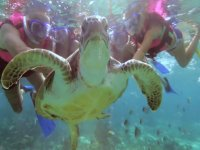 La Riviera y sus animales marinos
