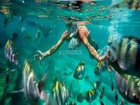 Rodeate de peces haciendo snorkel