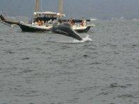La ballena grus