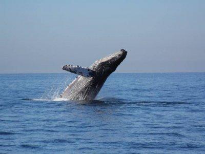 Ola Vallarta Yacht & Tours Whale Watching