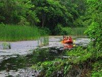 Rafting in the mangroves