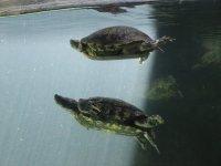 Learn to swim like them