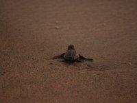 Free the turtles