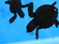 Meet the sea turtles