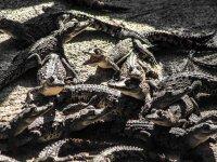 Beware of the alligators
