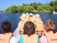 Going to the mangroves