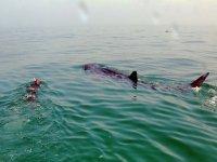 Expedicion de snorkel con el tiburon ballena