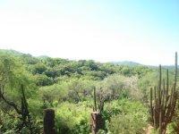 Sanctuary of the cactus