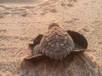 Help the turtles