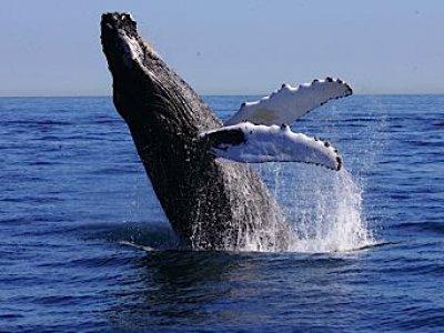 Mita Adventures Whale Watching