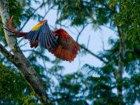 Aves en un paraiso natural
