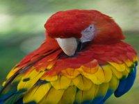 Centro de aves exóticas