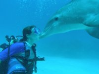 Encounter with dolphins