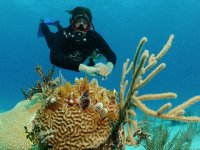 Arrecifes de corales en el Mar Caribe