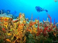Descubre los colores vibrantes bajo el agua de Cozumel