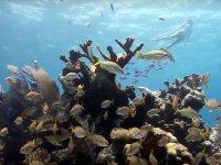 Snorkel en los arrecifes de Akumal