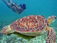 Descubre las tortugas de Akumal