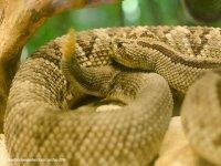 Coarse-scale viper