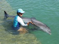 Stroking the dolphin fin