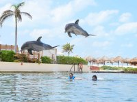 Dolphins jumping over the participants