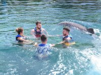 Interaction with dolphins in group