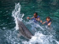 Playing with the dolphin as a family