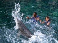Jugando con el delfin en familia