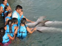 Group activity with dolphins