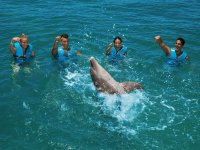 Playing in group with the dolphin