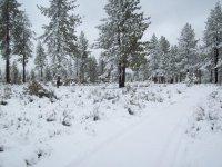 The Rancho Nevado