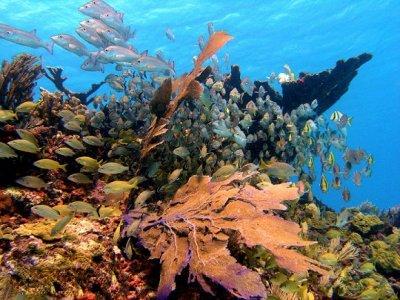 Dive Adventures Tulum