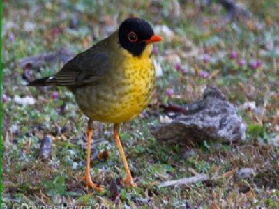 Oaxaca Birding Tours