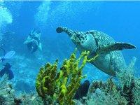 Diver in the sea