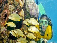 Snorkel between a school of fish
