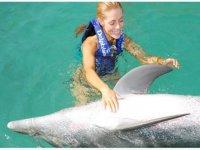 Stroking a dolphin