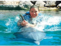 Emotion with dolphins