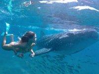 Conociendo el tiburón ballena