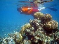 Ve los arrecifes