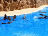Meet the dolphins