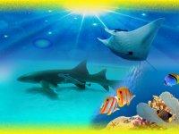 Aquarium and shark