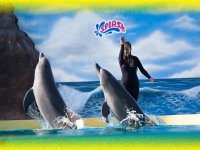Show of dolphins