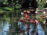 Flamingos del santuario de aves