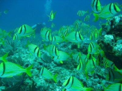 Dive in Puerto Morelos Snorkel