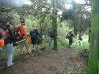 Orientation en forêt